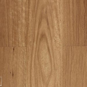 New England Blackbutt